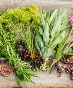 Семена за билки и подправки