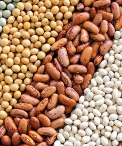 Семена за бобови култури